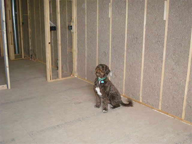 bunks insulation.JPG